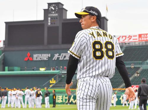 矢野燿大の画像 p1_31
