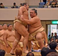 f-sumo-kise161021yg-w200_0.jpg