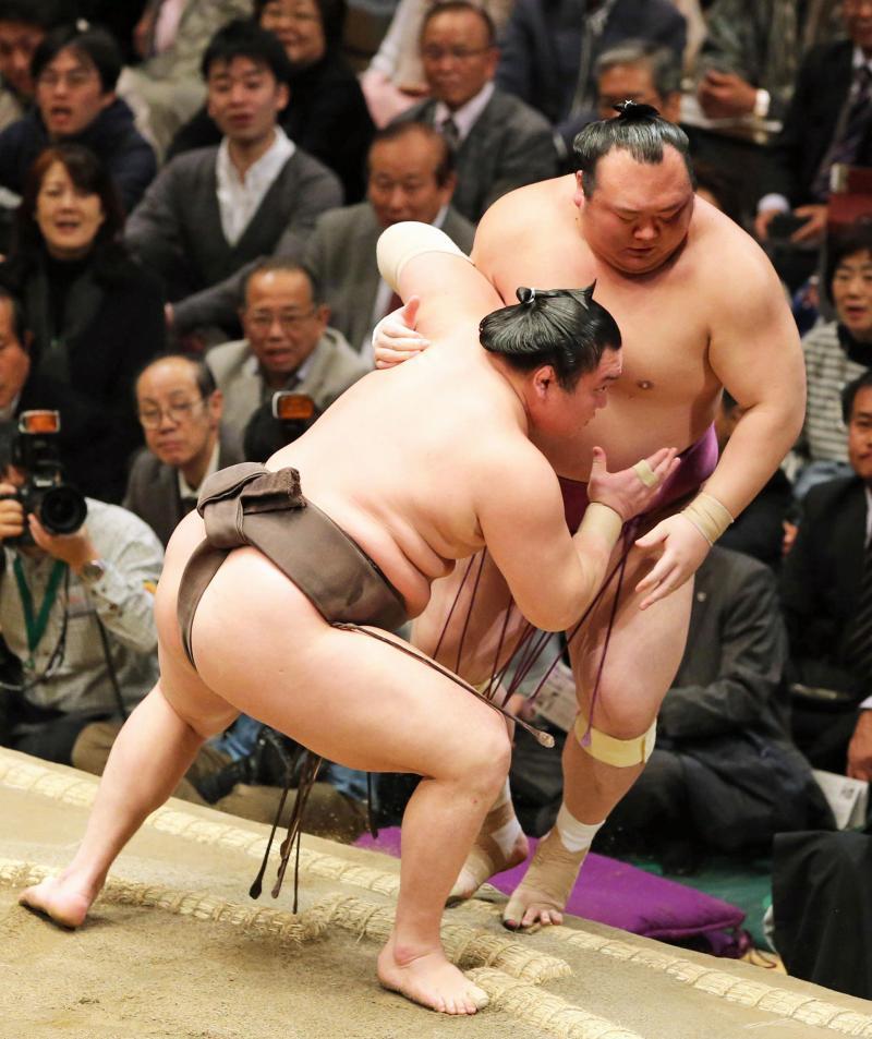 sm-hakuho-arai-P20160113-ogp_0.jpg