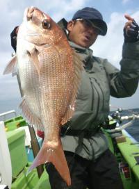 東京湾マダイ満開間近ですよ 3匹合計1・93キロ - 釣り : 日刊スポーツ