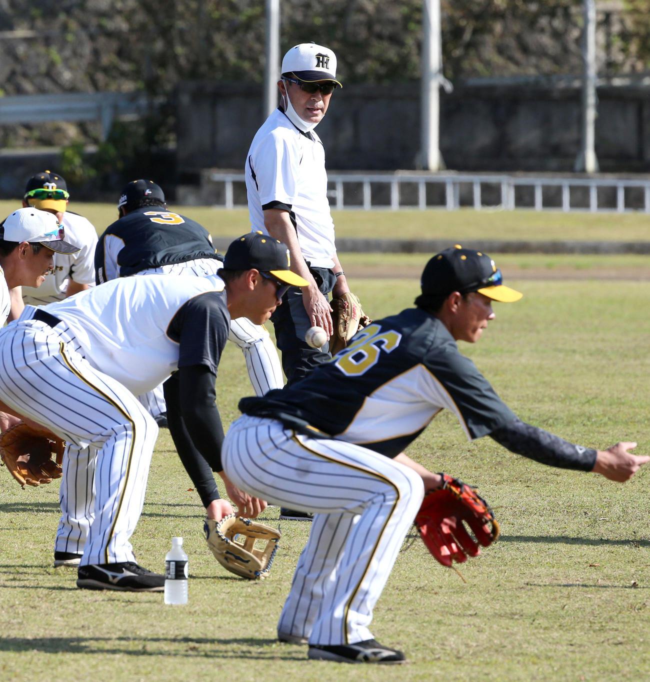 阪神川相臨時コーチ(上)はゴロ捕球する佐藤輝(左)ら内野陣を見つめる(2021年2月22日撮影)