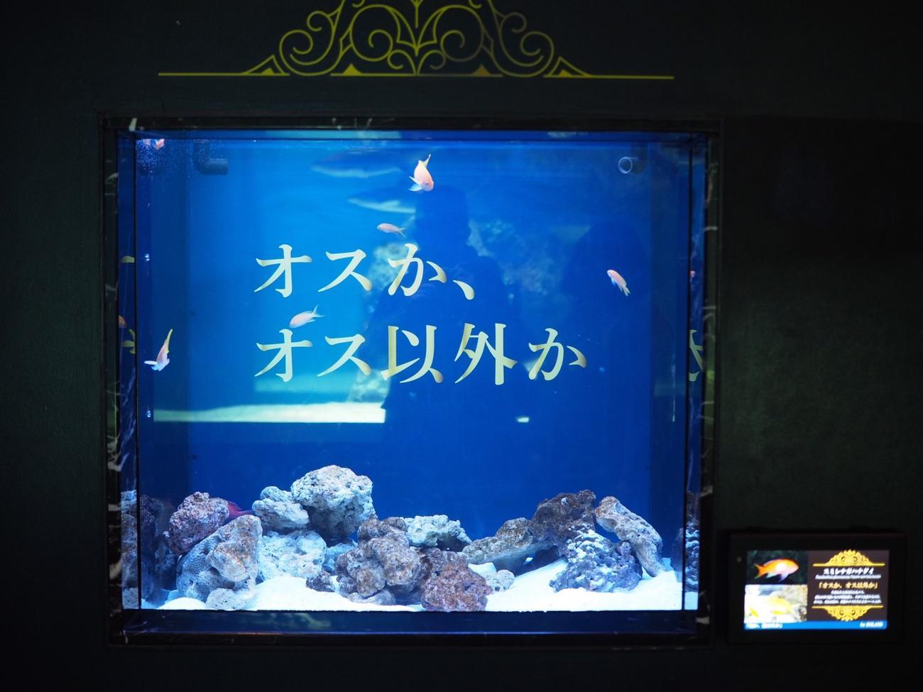 ホスト界の帝王・ローランドとコラボレーションしたアクアパーク品川に展示されている水槽