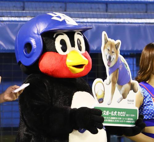 試合前、ベースボール犬「わさび」を等身大パネルで紹介するヤクルトのつば九郎(撮影・足立雅史)