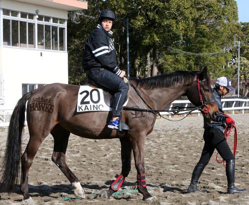 球団名が刈り込まれた馬に乗り、乗馬を体験する甲斐野央(撮影・菊川光一)