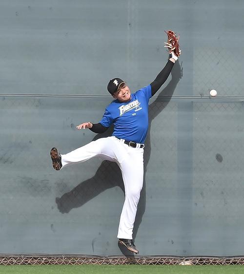 守備練習でフェンス前のボールに飛びつくも捕り逃す日本ハム清宮(撮影・菅敏)