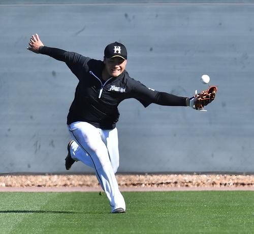 守備練習をする日本ハム清宮は、勢いよく打球に駆け込むも捕球できず(撮影・菅敏)