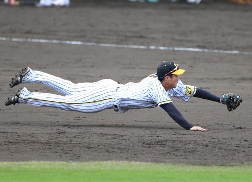 5回表紅組無死一塁、梅野隆太郎の打球を横っ飛びでキャッチしアウトを奪う遊撃手の木浪聖也(撮影・上山淳一)