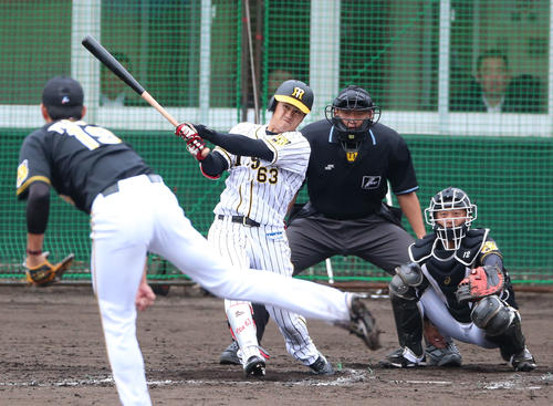 2回裏白組1死、板山祐太郎は右に本塁打を放つ(撮影・上山淳一)