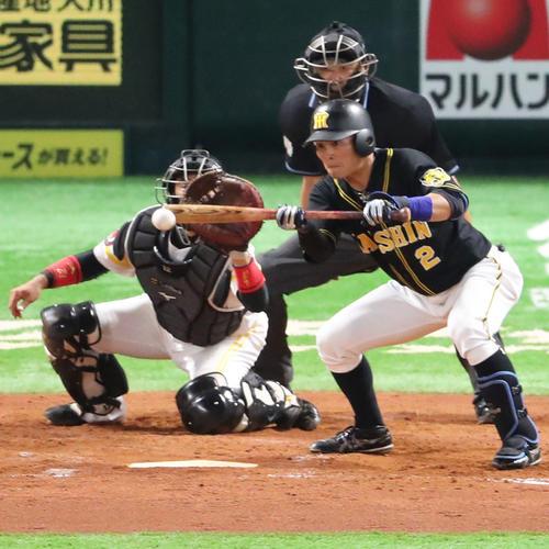 4回表阪神1死一、三塁、北條はスクイズを決める(撮影・梅根麻紀)