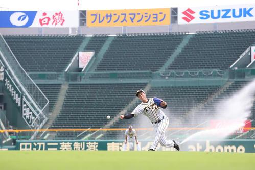 放水される甲子園のグラウンドで投球する青柳(撮影・上山淳一)