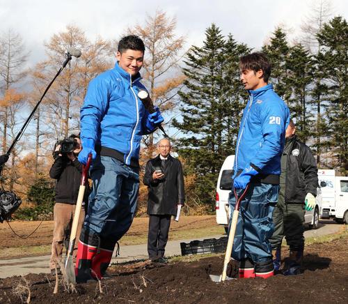 応援大使で由仁町を訪れた日本ハム清宮は収穫した長芋が途中で折れ渋い表情。右は上原(撮影・黒川智章)