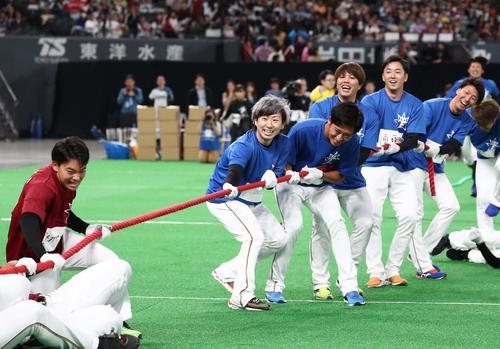 日本ハムファンフェスティバル 笑顔で綱引きする左から金子、白村、公文、斎藤、浦野(撮影・黒川智章)