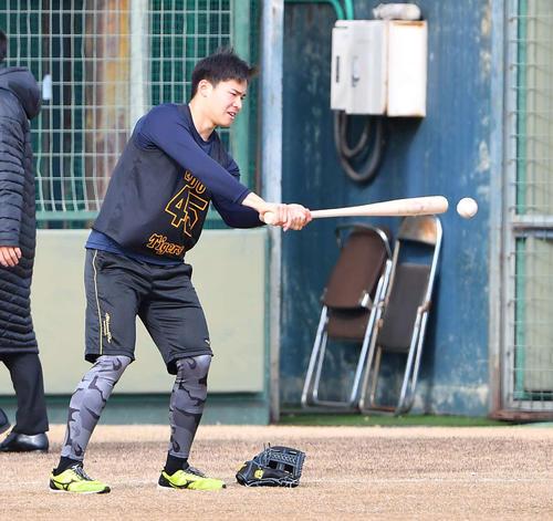 合同自主トレでペッパーをする阪神遠藤(2020年1月9日)