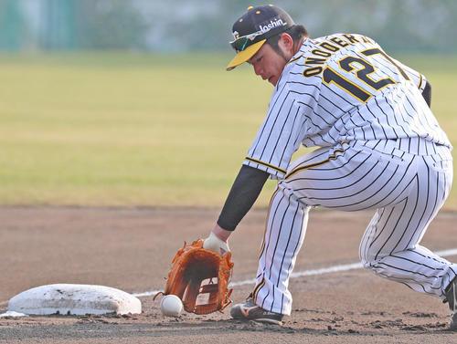 早出特守で三塁の守備練習を行う阪神育成ルーキーの小野寺暖(撮影・清水貴仁)