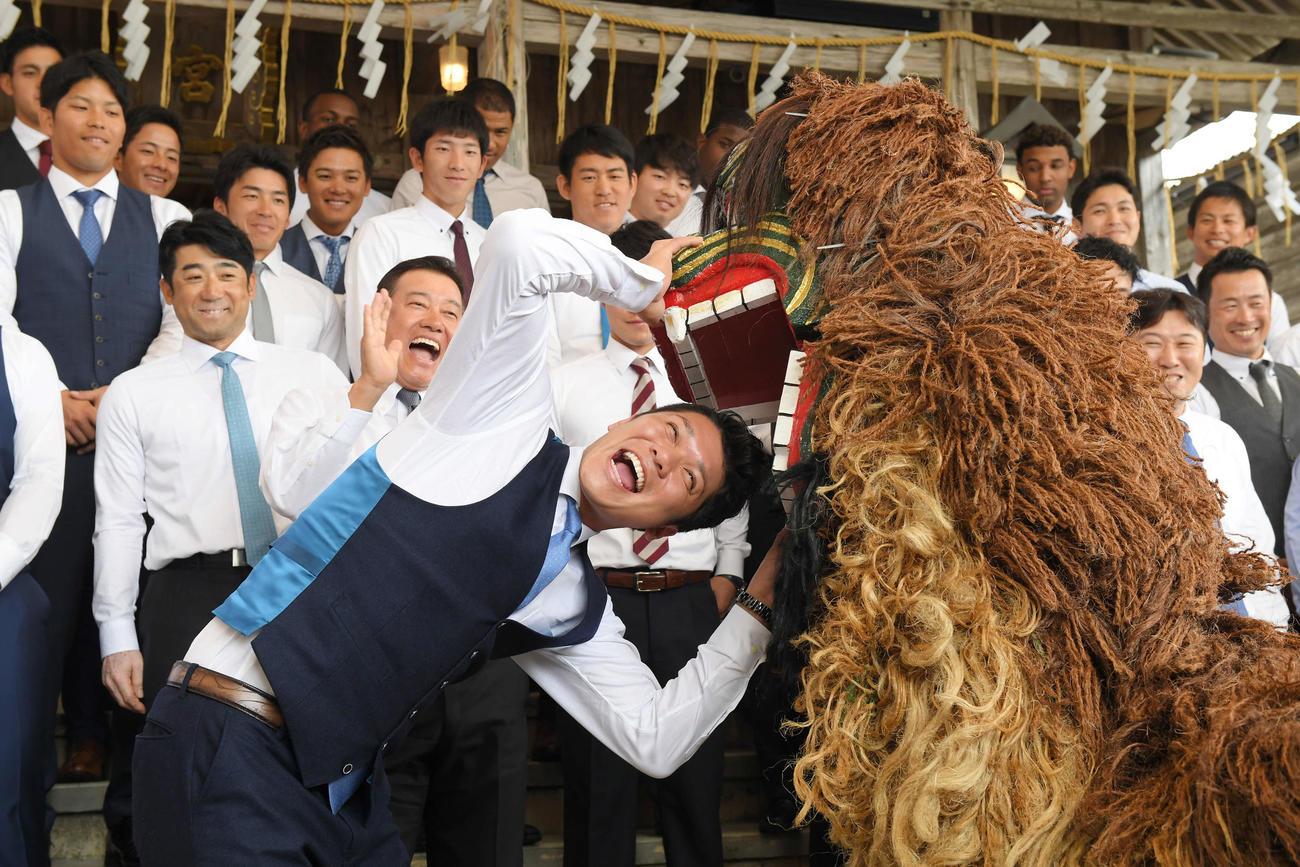 沖宮への参拝後、獅子に頭をかまれる巨人坂本勇人と笑顔で見つめる原辰徳監督(撮影・加藤諒)