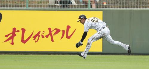 練習試合阪神対広島 7回表広島1死一塁、小園の右中間への打球を好捕する右翼手島田(撮影・清水貴仁)