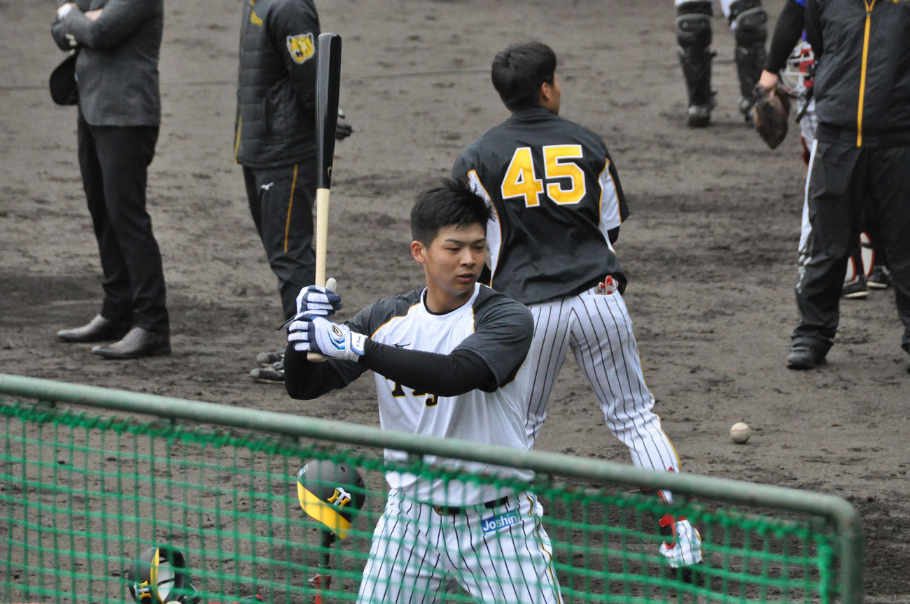 阪神ドラフト2位井上広大外野手(18=履正社)はティー打撃を行う
