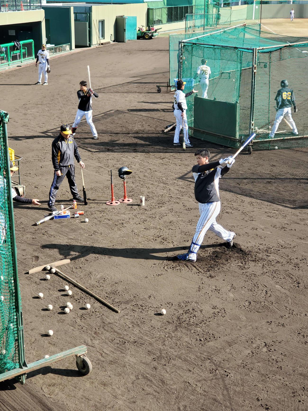阪神井上は豪快なティー打撃を行う。隣はチェックする和田TA