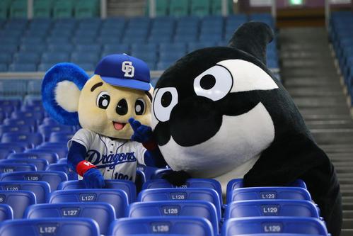 中日対巨人 試合前、スタンドでじゃれ合うドアラ(左)とグランパスくん(19年5月19日撮影)