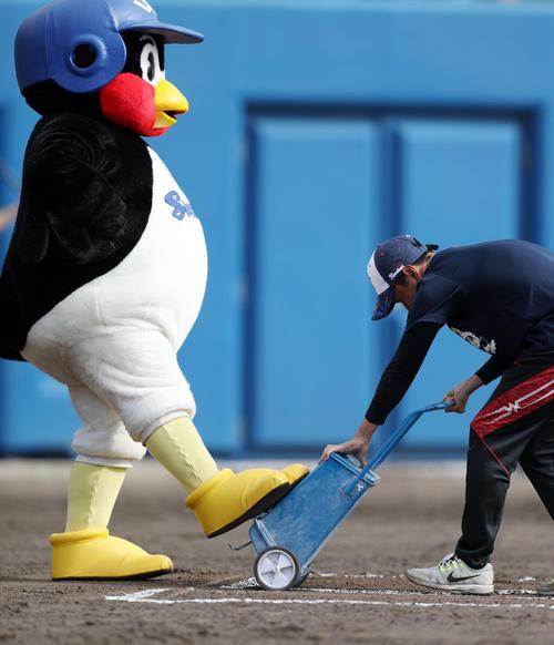 練習試合 ヤクルト対楽天 5回裏を終え、白線を引き直すスタッフの邪魔をするつば九郎(20年2月19日撮影)