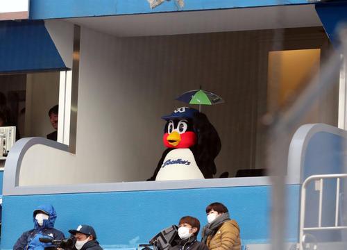 20年3月7日のオープン戦 ヤクルト対ロッテ 7回、スタンドで盛り上がるつば九郎(撮影・垰建太)