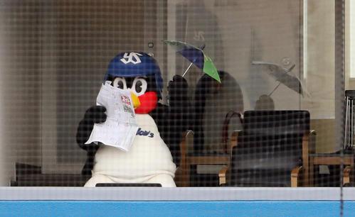 20年3月7日のヤクルト対ロッテ 7回表を終え、競馬新聞を読みながら傘を振るつば九郎(撮影・狩俣裕三)