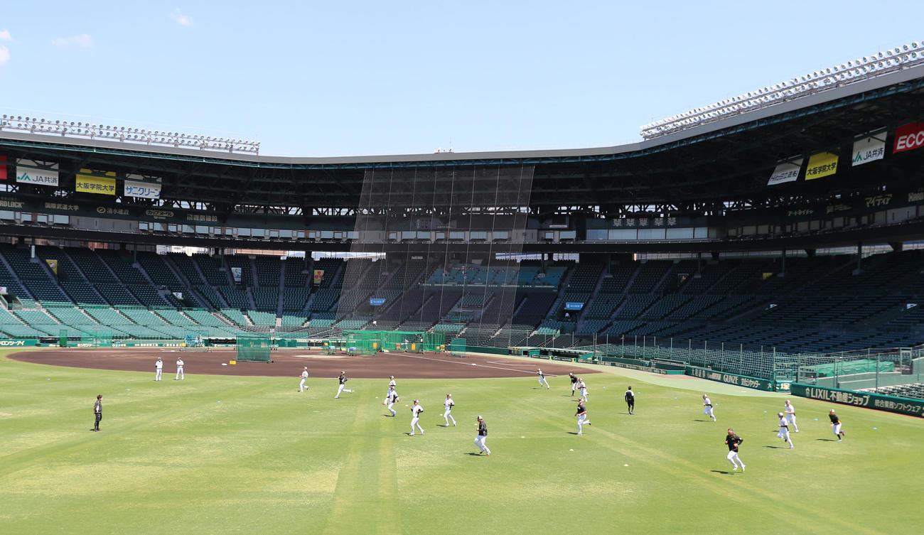 甲子園で練習を行う阪神の選手たち(撮影・清水貴仁)