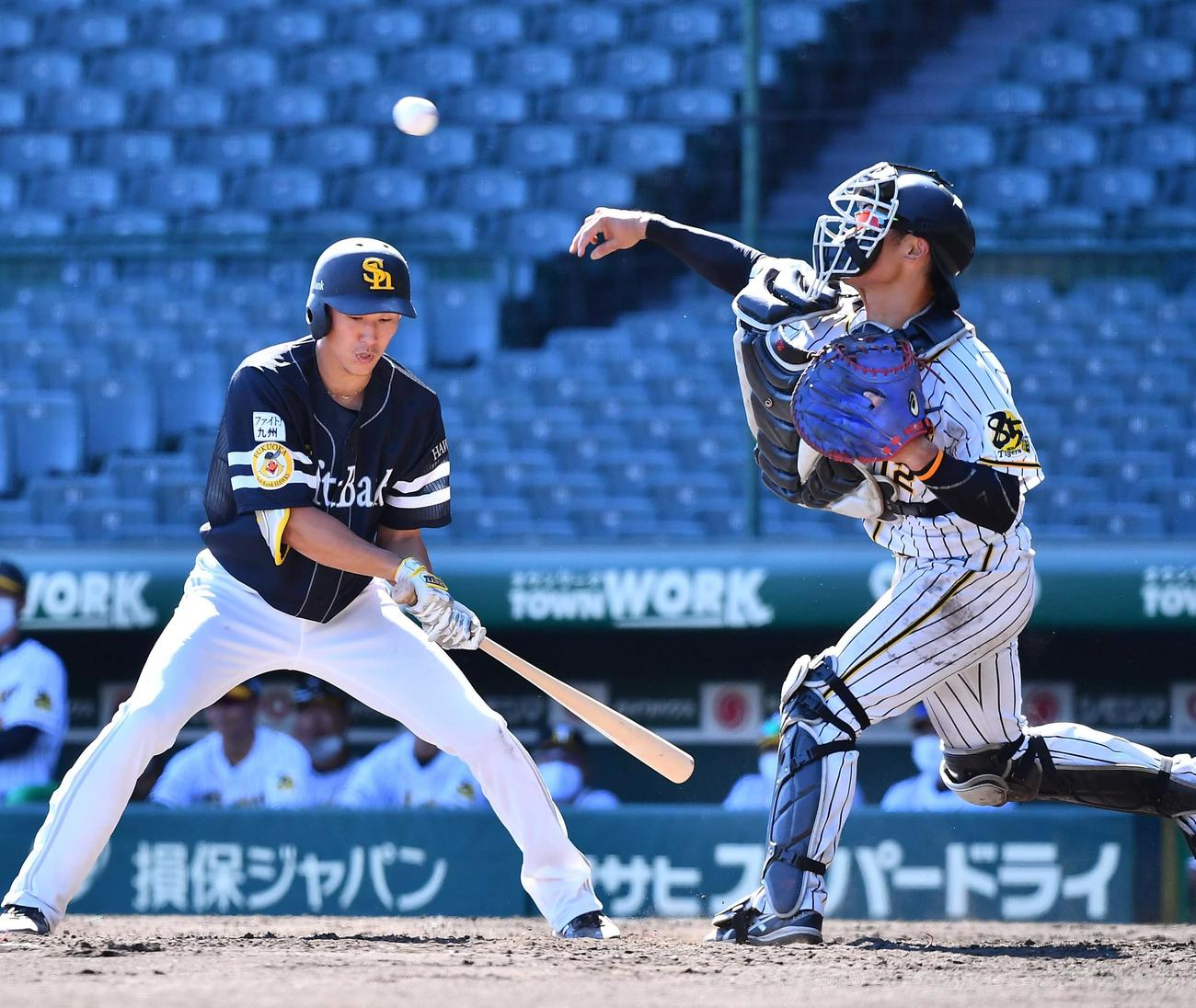 阪神対ソフトバンク 5回表ソフトバンク1死一塁、二盗を狙う甲斐を刺す坂本(撮影・上田博志)