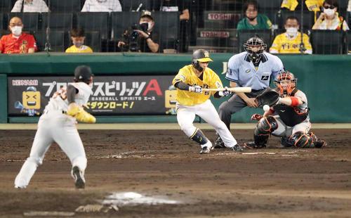 阪神対巨人 8回裏阪神1死一、二塁、近本は三塁線にバント安打を決める(撮影・加藤哉)