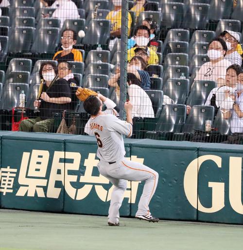 阪神大巨人6回裏阪神無事坂本容器は木浪の邪飛を追ってフェンスの前で捕球する(撮影・加藤初)