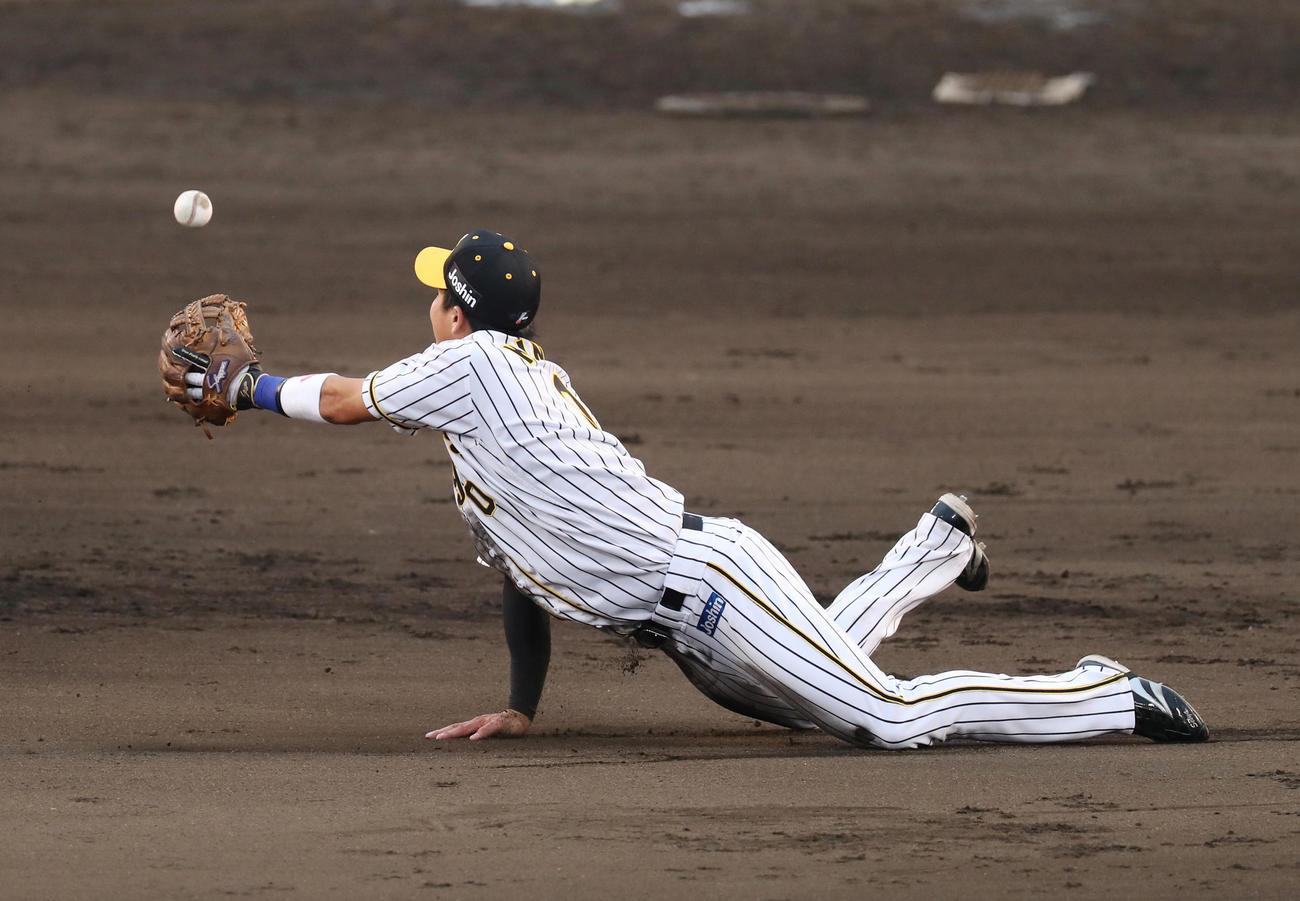 阪神対DeNA 9回表DeNA1死一塁、オースティンの打球に飛びつき、二塁へグラブトスする遊撃手木浪(撮影・前田充)