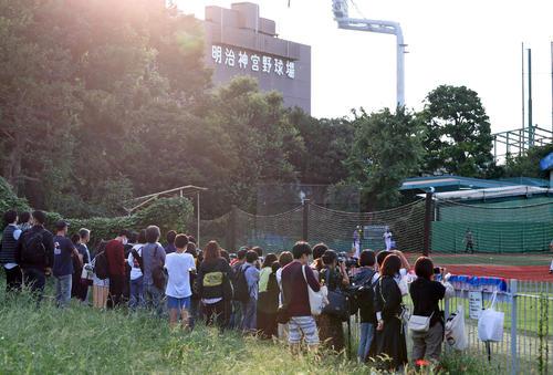 ヤクルト対阪神阪神の練習を見てファン(撮影・清水貴仁)