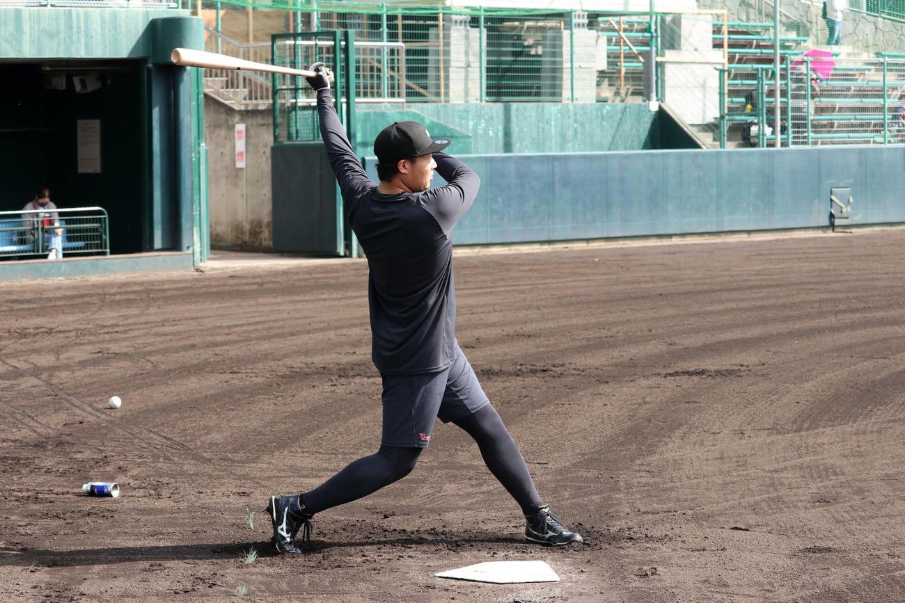 打撃練習を行い打球を見つめる阪神大山(代表撮影)