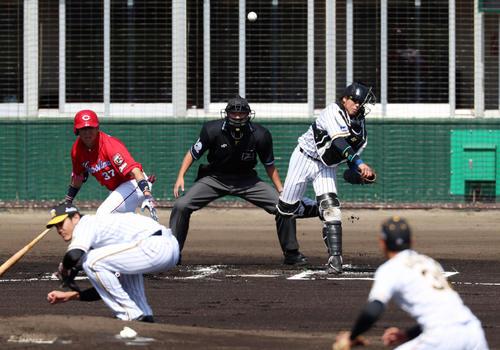 阪神対広島 1回表広島1死一塁、梅野は打者野間のとき一走羽月を刺す(撮影・加藤哉)