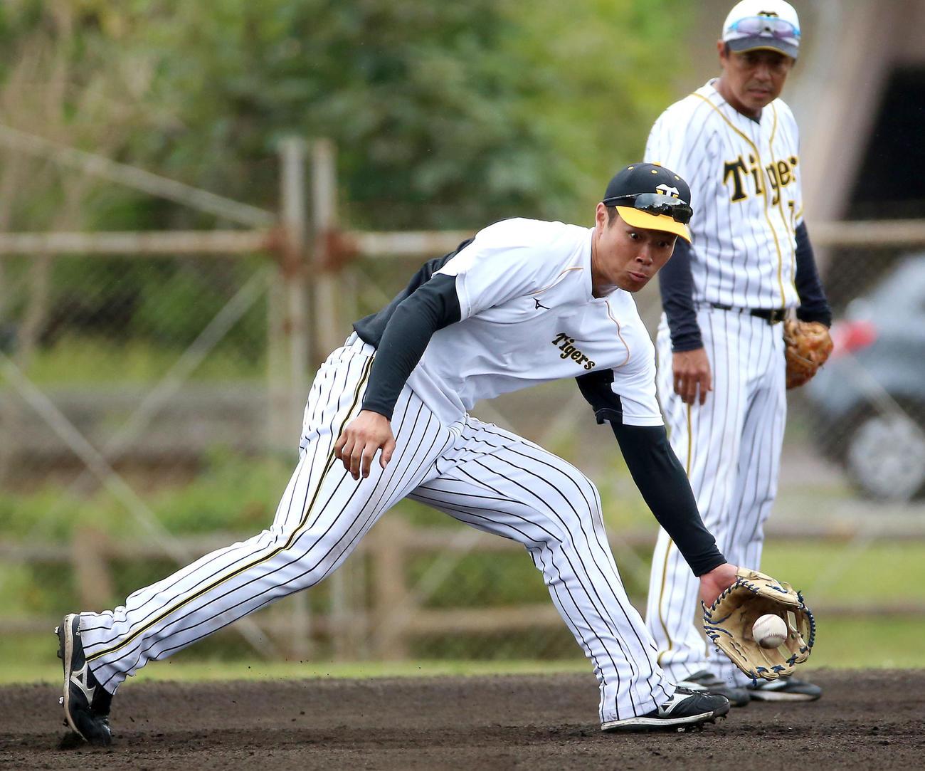 サブグラウンドでノックを受ける佐藤輝明、右は藤本内野守備走塁コーチ(撮影・上山淳一)