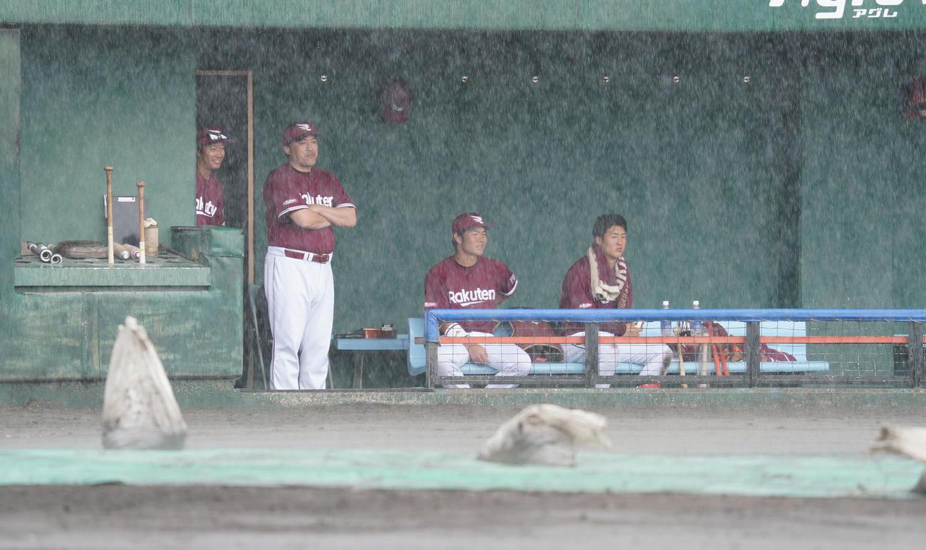 練習試合・中日対楽天 5回表楽天攻撃中、雨が強く降り出し試合が中断。ベンチでグラウンドを見つめる石井一久監督(撮影・森本幸一)