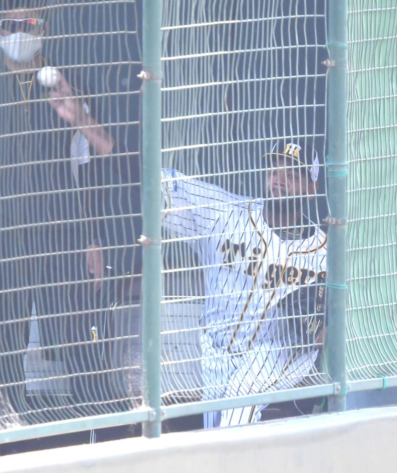 ブルペンで投球練習を行う阪神アルカンタラ(代表撮影)