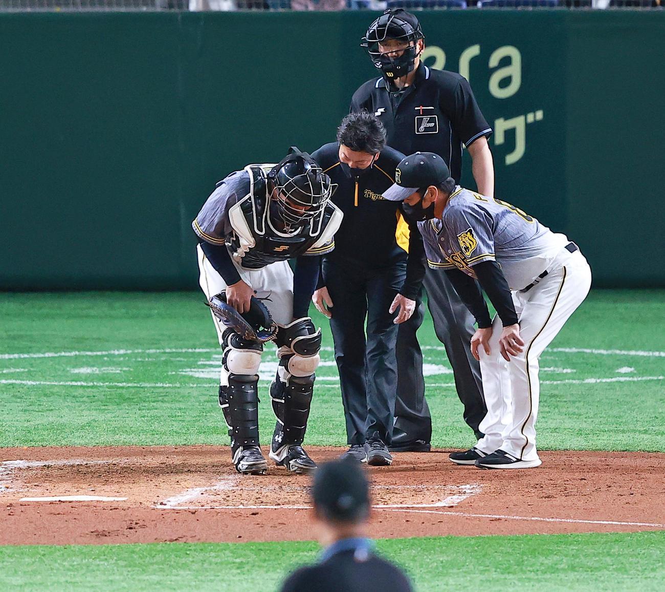 22日巨人戦の1回、巨人梶谷の打球を当てて痛がる阪神梅野