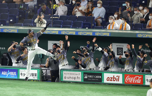 巨人対阪神 4回表阪神1死、ソロ本塁打を放ち、ベンチ前で「ラパンパラ」ポーズを決めるマルテ(撮影・狩俣裕三)