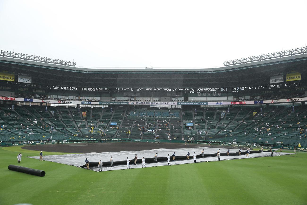 阪神対巨人 グラウンドに敷いたシートをはがし整備を始める阪神園芸の職員ら(撮影・前田充)