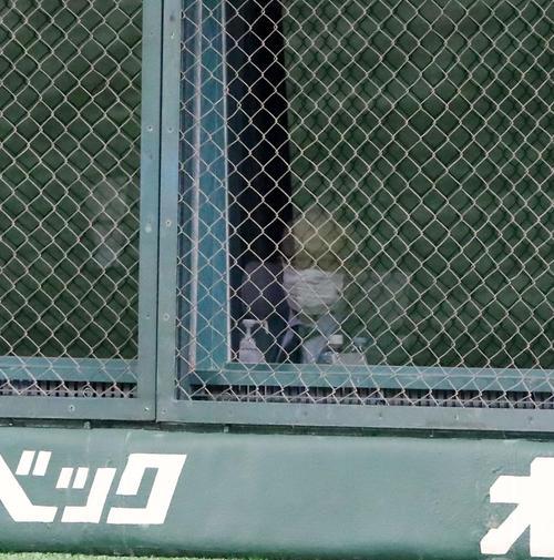 巨人対阪神 5回表、ネット裏から観戦する長嶋終身名誉監督(撮影・加藤哉)