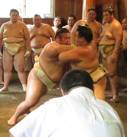 二所ノ関一門の連合稽古で、阿武咲(右)と申し合いを行う貴景勝