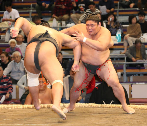 鳩岡(左)に寄り倒しで敗れる将豊竜(撮影・栗木一考)