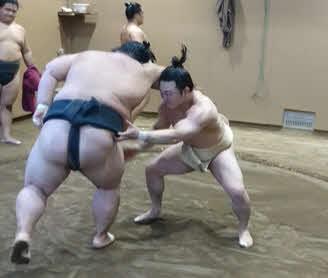 若い衆を相手に相撲を取る炎鵬(右)