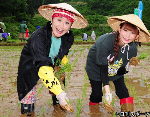 "Photo of Kobayashi Sachiko ""When I'm Patience Now"" No children participate in the annual rice planting"