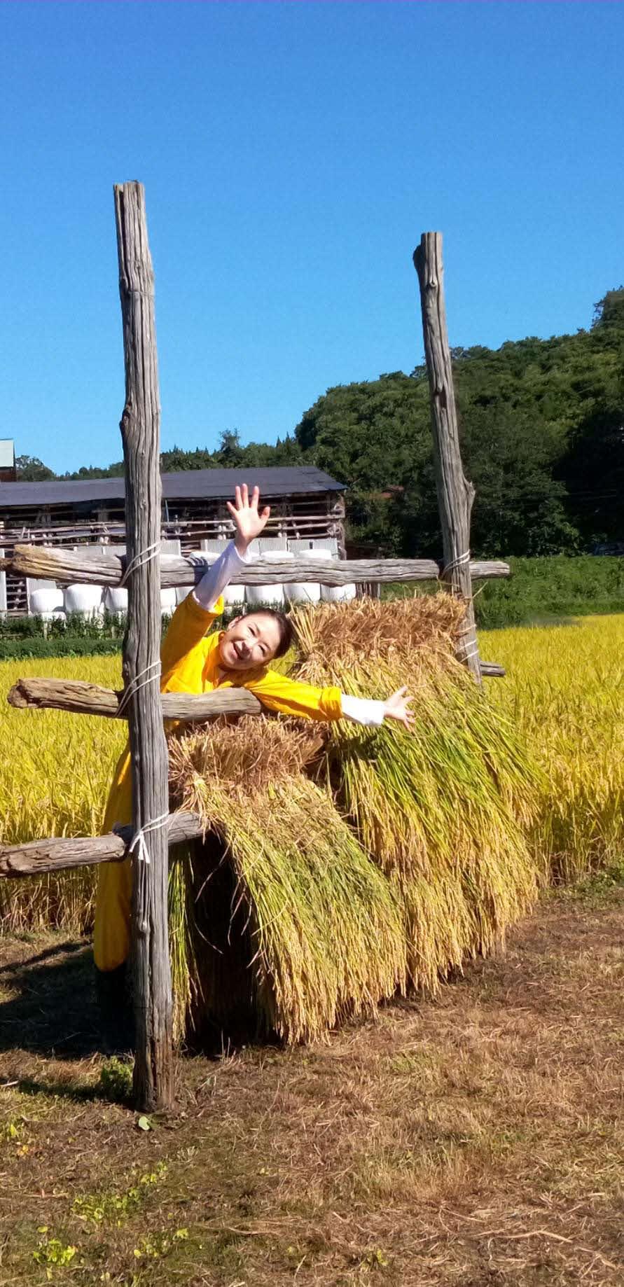 秋田県の実家で稲刈りを行った岩本公水
