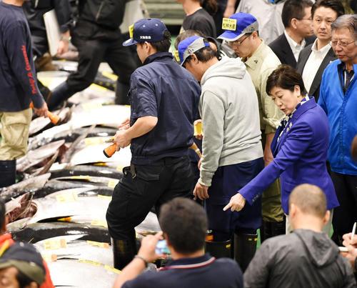 生鮮マグロ卸し売場を見学する小池百合子都知事(撮影・横山健太)