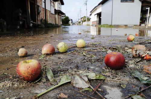 13日午後2時10分 千曲川の決壊による浸水で、落ちて道路に散乱したリンゴ(共同)