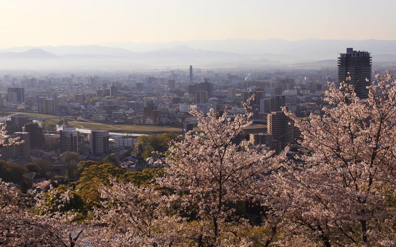 花岡山から見渡す朝焼けの熊本市内と桜(撮影・垰建太)