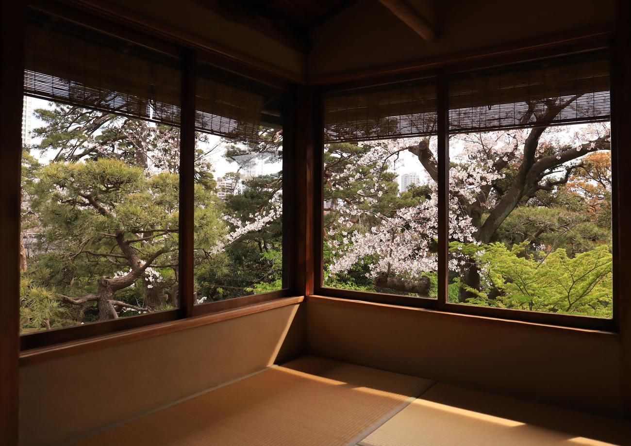 八芳園の料亭「壺中庵」の小窓からは色鮮やかな桜と庭園の緑が風情ある瞬間を作り出す